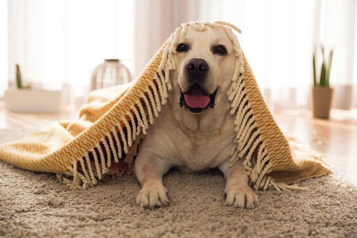 Home Design Tips Based On Your Dog's Personality